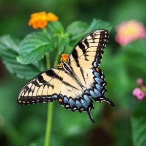 Camping Clos De La Chaume : Jardins Des Papillons