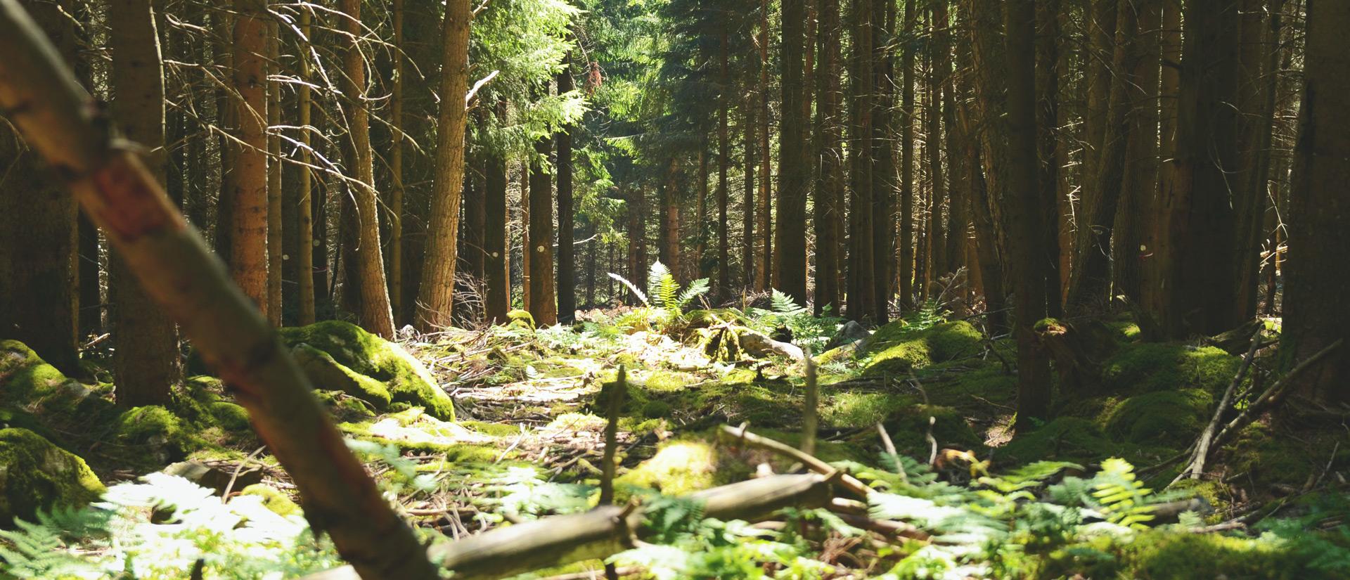 Camping Clos De La Chaume : Sous Bois Vosges