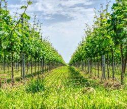 Camping Clos De La Chaume : Vignoble Alsacien