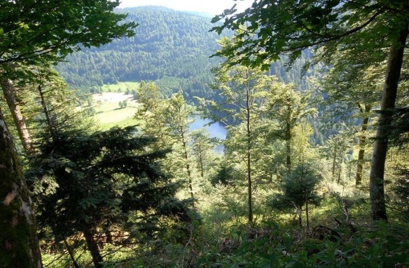 camping Vosges à la montagne